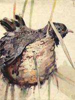 М. А. Воїнственський. Наші птахи